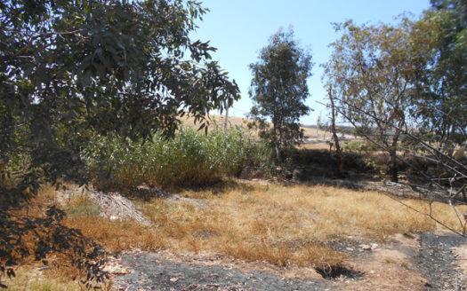 Vente terrain un Hectare titré viabilisé route du barrage