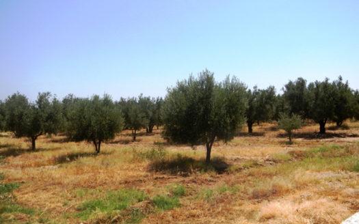 Terrain vendre route de Sidi Abdella Ghiat